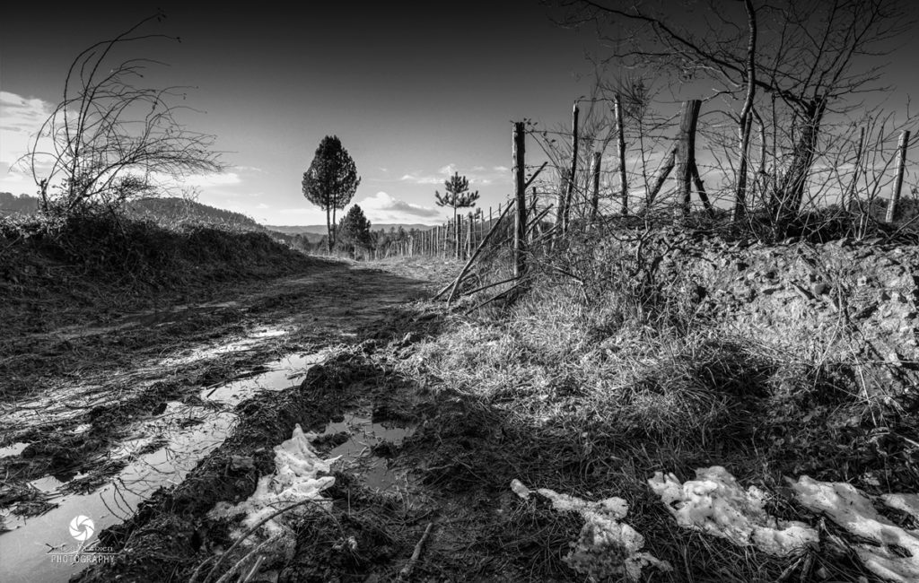 Landscapes / Black & White